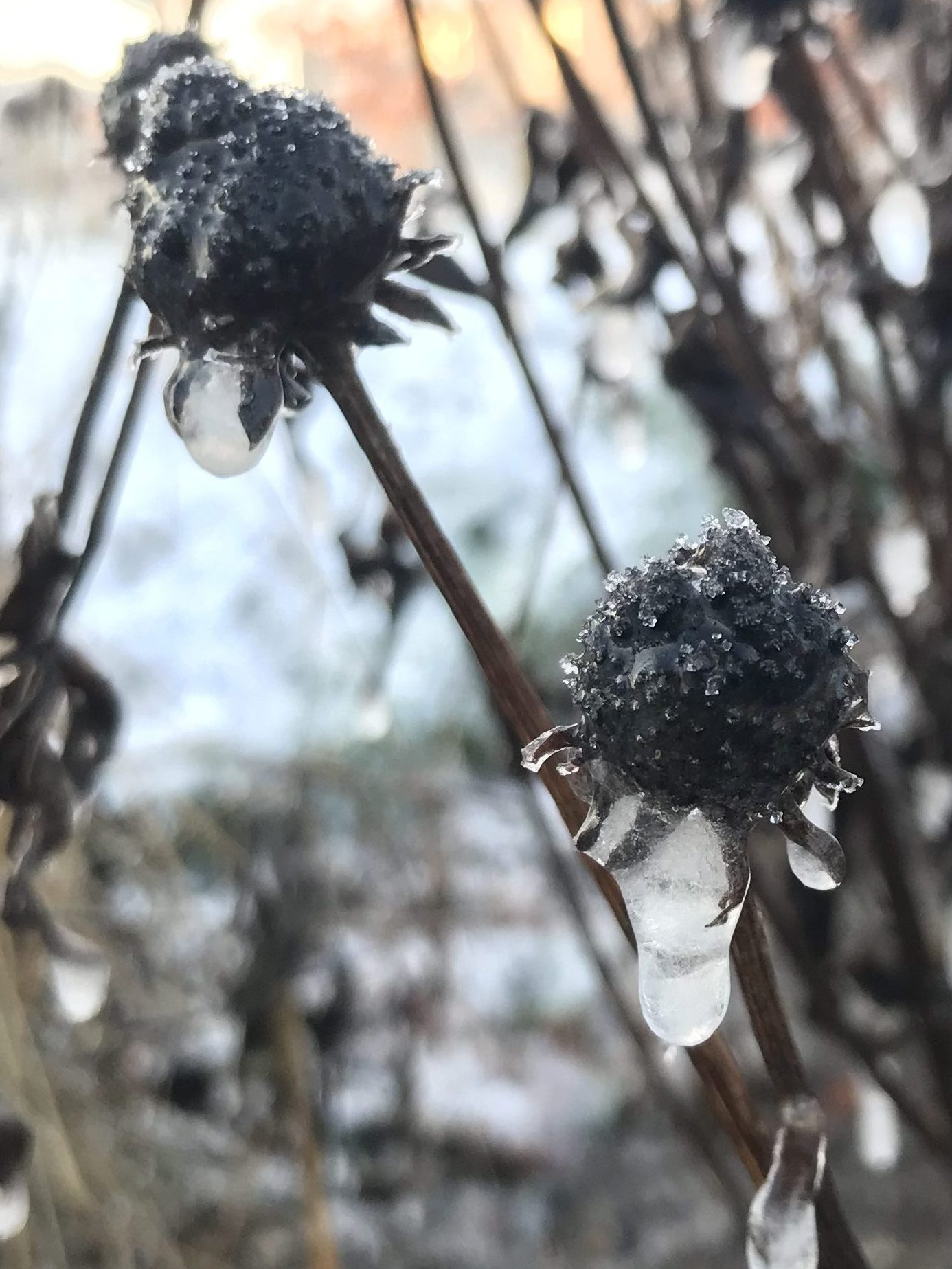 Kong vinters tryllestøv
