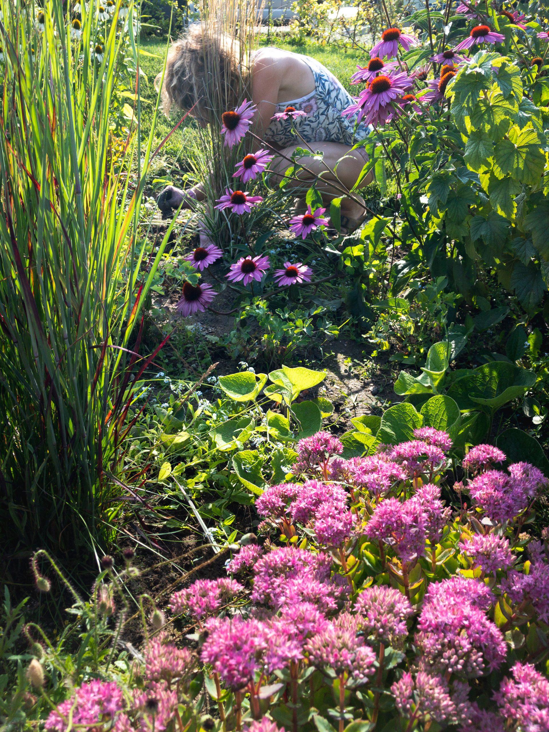 Regnbed i haven