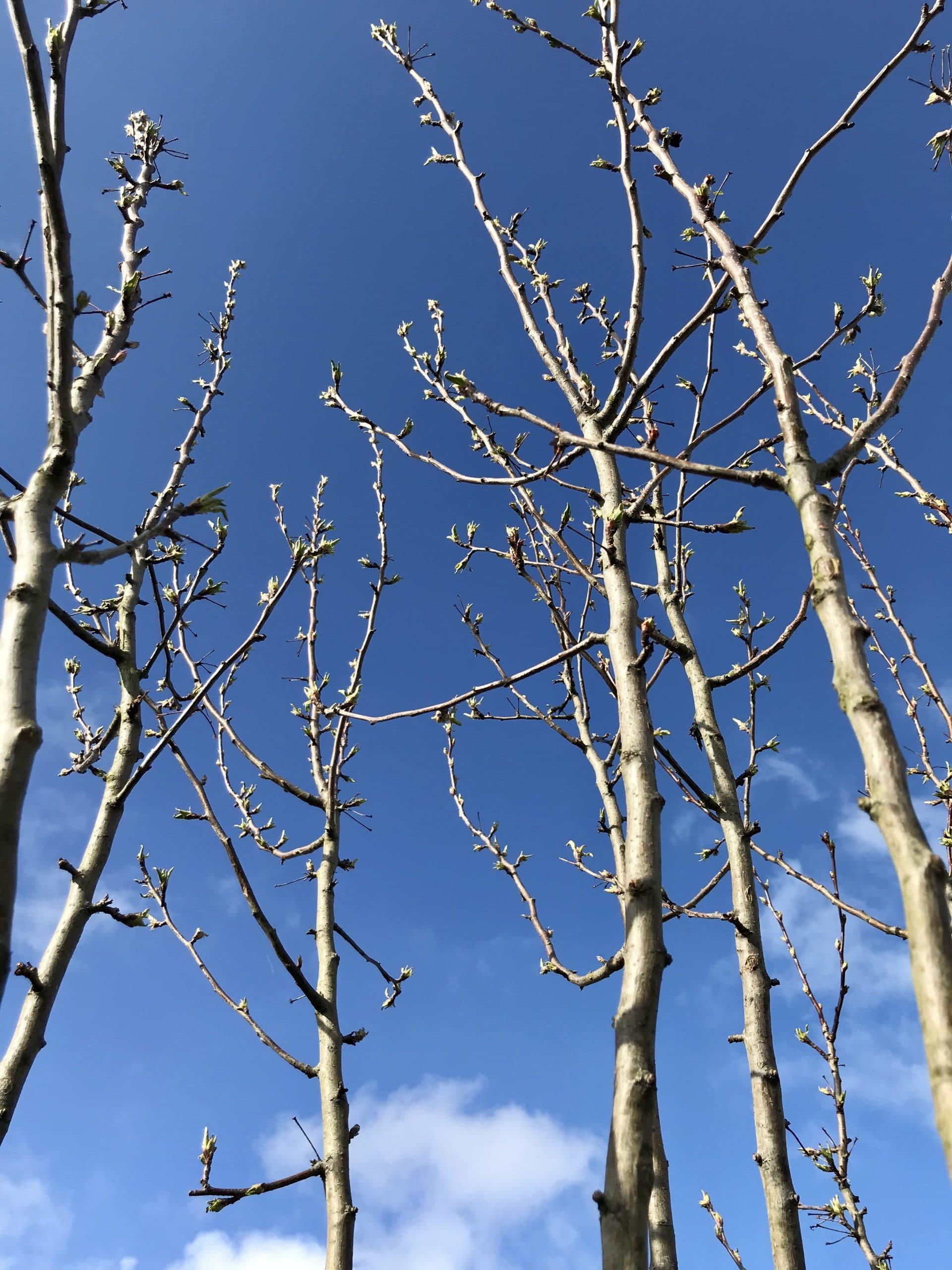 Tips til nybyggerhaven: Plant et træ i traktosejord